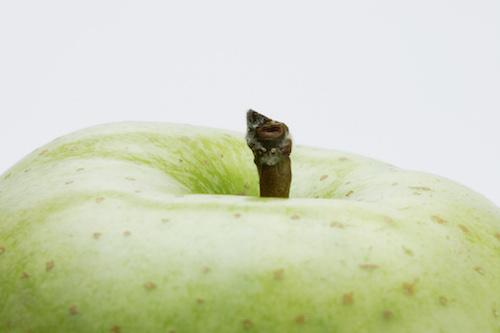 男性注目_アップルパイやりんご狩りデートで女性をその気に